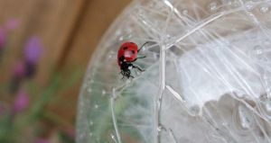 There's a ladybug ... by RecreateStock