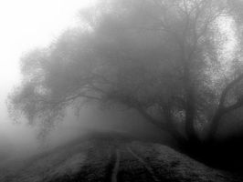the path and an old tree 2 by snusmumrikenn
