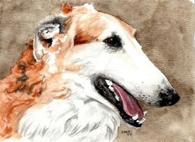 Borzoi by RamonaQ