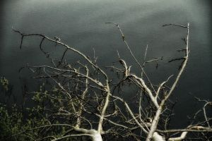 Branches rise over the lake by Tjabula