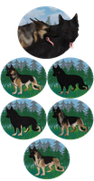 GSD .:. B Litter .:. CLOSED by T-Rex-Kennel