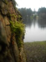 tree moss by alderwiki