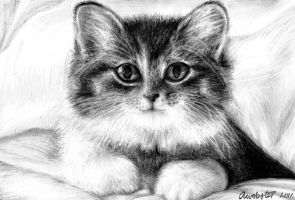 .:Cute Kitten Drawing:. by annoKat