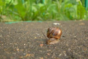 Little snail 19 by Panopticon-Stock