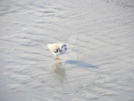 Baby Seagull 2 by Charlief43