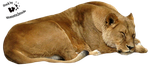 Cut-out stock PNG 41 - sleeping lioness by Momotte2stocks