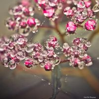 .:Droplet Diamonds:. by Frank-Beer