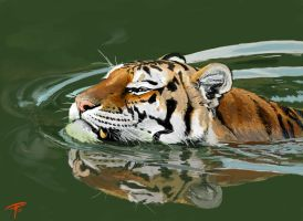 swimming tiger by oldpantymachine