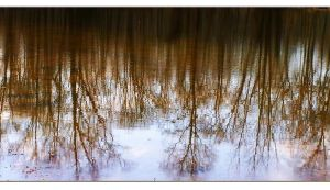 Water Color Trees by AcceptedOutcast