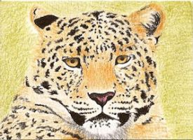 Day 6: Amur Leopard ACEO by whitetippedwaves
