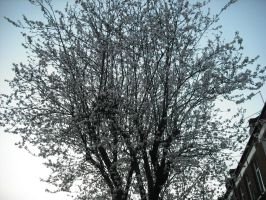 Blossoming Tree by betterwatchit