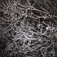 entanglement by andrewkevin