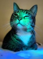 Lighted Cat 6211724 by StockProject1