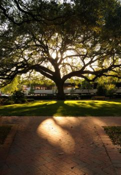 Backlit Tree by barefoote