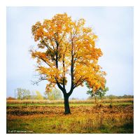 .: autumn tree :. by all17