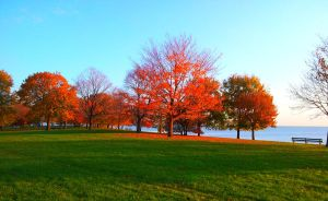 Autumn trees by inafas