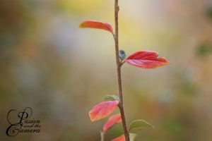 Autumn by PassionAndTheCamera