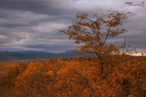 Fall by andreiciungan