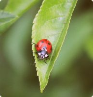 Lady Bug by queenfrOg