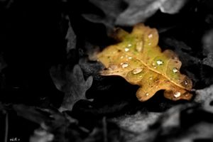 Water Drops on Leaf by Nick356