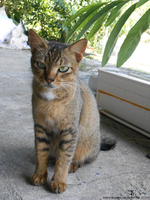 Country cat 20141025 _ 1 by K4nK4n