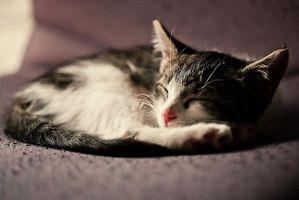 Peaceful Slumber of the Crazy Cat by servilonus