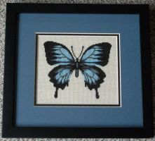Ulysses Butterfly by SmiteTheeWithApples
