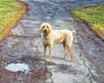 A Dog Named Goose 2015 by joseph-sweet
