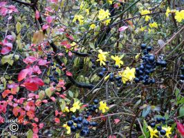 Novemberfarben - The Colours of November by Cundrie-la-Surziere