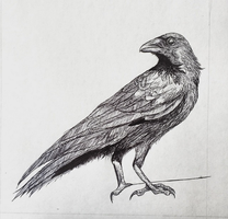 Crow by toseduceaholmes