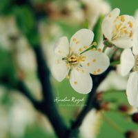 Spring by xTive