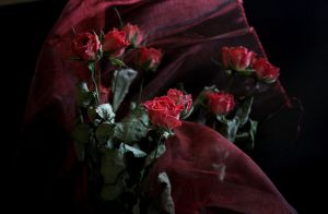 A bouquet of dry roses by m-gosia
