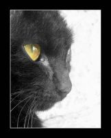 black cat II by GreenSerenity