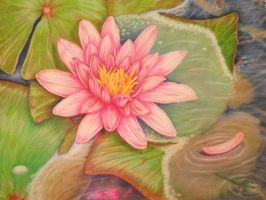 pink water lily by 1976Kunako