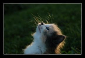 Whiskers by BlindedbyScience
