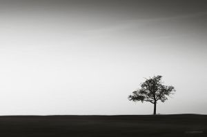 wind of life by DavidSchermann