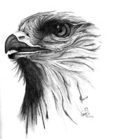 Just an eagle... by CaroRichard