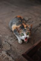 scared cat by violentinephoto