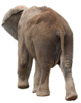 Stock PNG elephant by Earthymoon