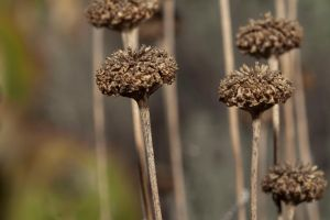 Seed Pods by dkbarto