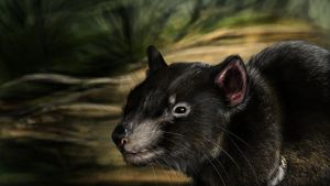 ...::: Tasmanian Devil - SP :::... by AmorpheusArt
