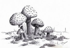 Mushrooms by Elentarri