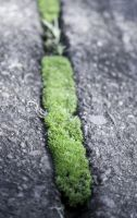 Moss Between Concrete by Kintall