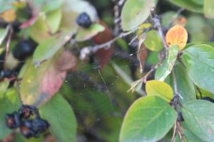 spiderweb 1 by FreedomeSoul88