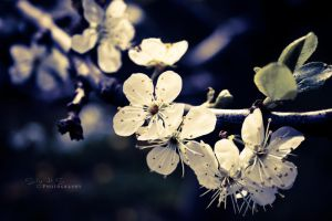 When spring comes again by shhilja