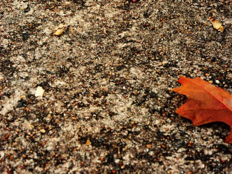 autumn leave by yoletsee