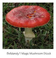 Magic Mushroom Stock by Belldandy1-Stock