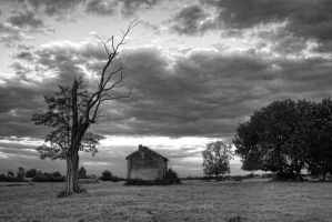 The emaciated tree by Anupthra