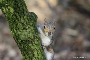 The Cheeky Squirrel by MichaelJTopley