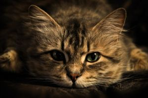 Cat by PABAP